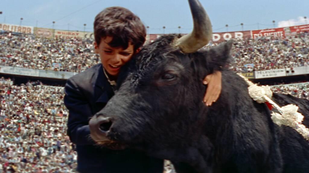 【黒い牡牛】のストーリー(あらすじ)