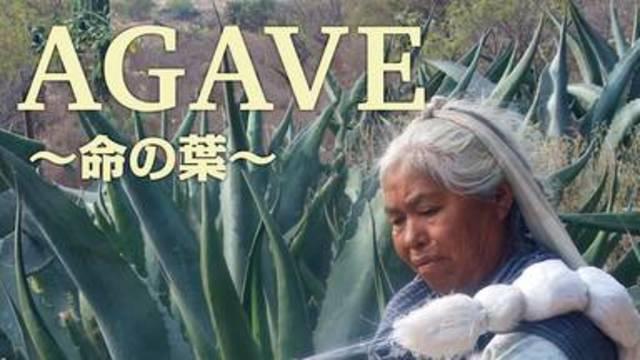 【AGAVE~命の葉~】映画を無料フル動画視聴する方法丨無料映画視聴におすすめVOD動画配信サービスはどこ?