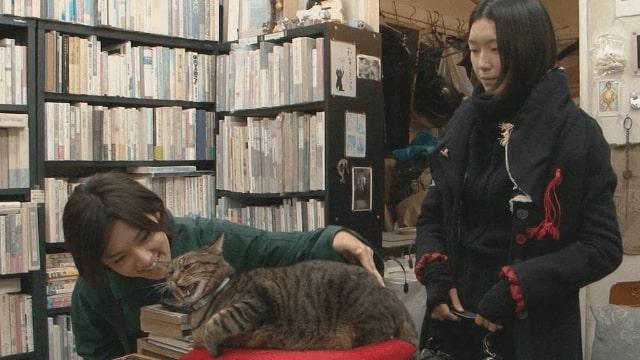 【私は猫ストーカー】のストーリー(あらすじ)